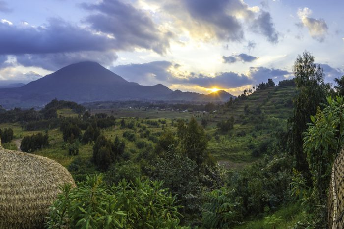 Ruanda, gorilla e safari