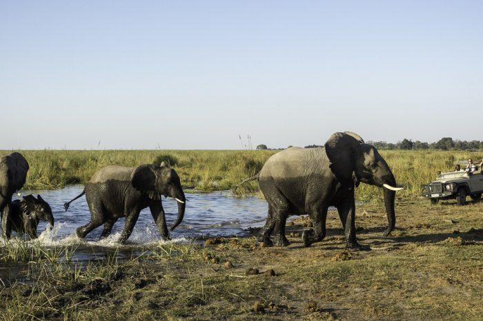 Safari in Botswana e Cascate Vittoria