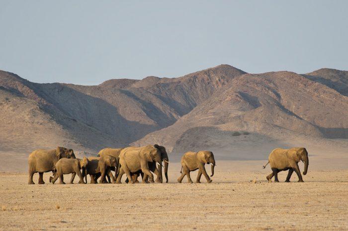 Avventura nel deserto della Namibia
