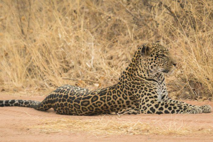 Tanzania: il Circuito Safari del sud e Zanzibar