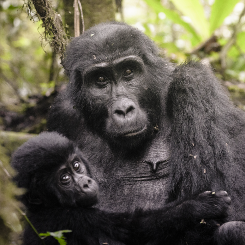 Uganda adventure