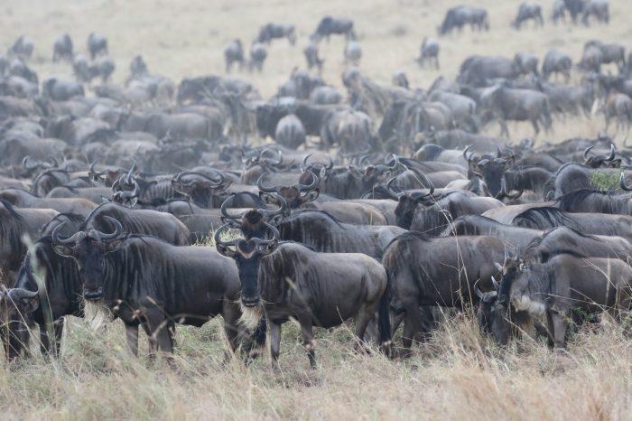 Safari di lusso in Kenya