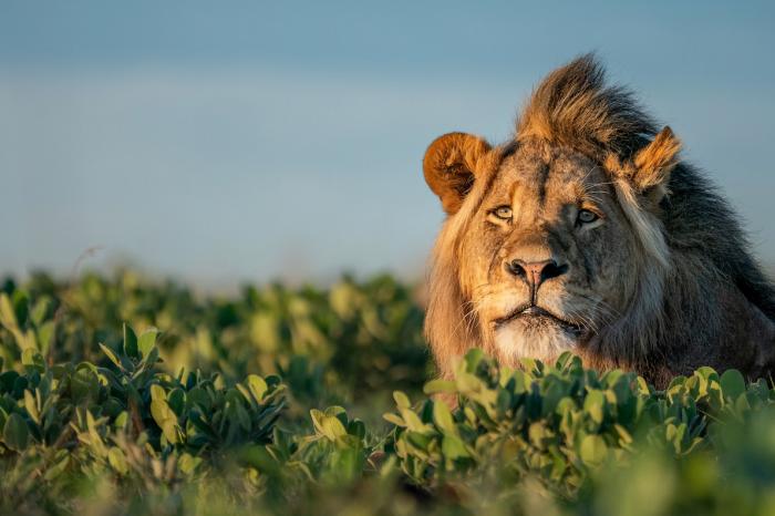 Straordinario Zambia
