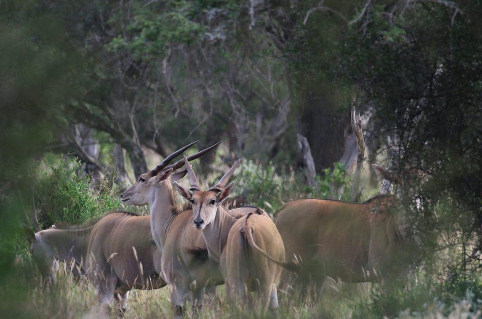 Lake Mburu National Park